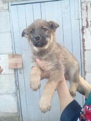 Милый щенок в надежные и заботливые руки!!!