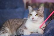 Красавец котик ищет дом и семью!!!!