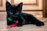 Прелестный котеночек в поисках любящих родителей!