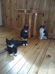 Замечательная семья черно-белых котеек!