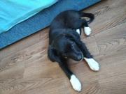 Милый щеночек ищет дом и любящих хозяев!!!