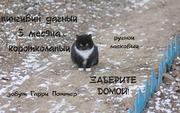 Очароваш-котик в поисках теплого уголочка!!!