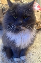 Котик Жорик ищет любящую семью!