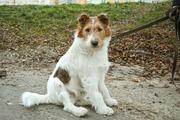 Клевый пёс Фокс очень нуждается в любви и заботе!